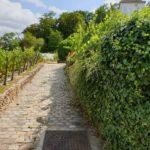My Montmartre Tours - Vineyards of Montmartre